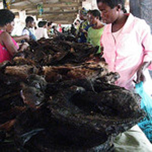 Kindu Congo Bushmeat market 2009 provided by Terese Hart