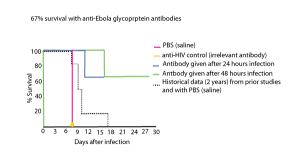 anti-ebola virus antibodies protect against ebola virus infection